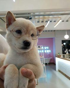 Doggo source - stack cute baby animals, animals and pets, funny animals, cu Shiba Inu, Shiba Puppy, Cute Baby Animals, Animals And Pets, Funny Animals, Funny Dogs, Cute Puppies, Dogs And Puppies, Akita Puppies