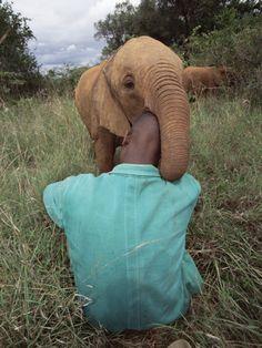 """African Elephant (Loxodonta Africana) Orphan Playing, *Tsavo East National Park, Kenya*""    [Photographer ~Gerry Ellis~] 'h4d'120916"