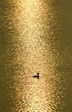 golden pond Reminds me of the movie! So beautiful! Foto Macro, On Golden Pond, Golden Lake, Cool Photos, Beautiful Pictures, Shades Of Gold, Mellow Yellow, Belle Photo, Beautiful World