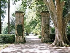 Driveway of a chateau in Provence. Wedding ceremony destination for sure.