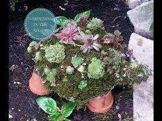 How to Make A Succulent Turtle Topiary - Gardening in the Shade