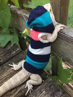 It's our newest handmade pre made sleeveless for your juvenile bearded dragons fashion clothing. Now you can take them anywhere with you with this cute adorable outfit ❤️. Bearded Dragon Cage, Pet Dragon, Dragon Ball, How To Train Dragon, Beard Grooming, Mother Of Dragons, Reptiles And Amphibians, Pet Store, Cute Animals