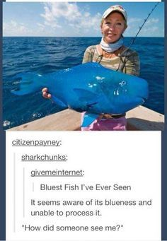 24 Hilarious Fish Memes Proving You Can Be Funny Without Even Talking - I Can Has Cheezburger? Stupid Funny, Funny Cute, The Funny, Funny Stuff, Funny Things, Random Stuff, My Tumblr, Tumblr Funny, Funny Memes
