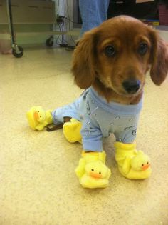 PUPPY IN PAJAMAS. Family Night PJ Party Facebook photo!!