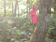 bunny fever in FUJI ROCK FESTIVAL'14