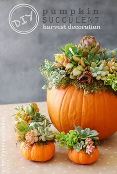 34 Pumpkin Decorations For Fall - Pumpkin Succulent Harvest Decoration - Easy DIY Pumpkin Decor Ideas for Home, Yard, Outdoors - Cool Pumpkin Decorating Ideas for Adults and Kids Party, Creative Crafts With Paint, Glitter and No Carve Projects for Hallowe Deco Floral, Art Floral, Diy Pumpkin, Pumpkin Carving, Pumpkin Flower, Pumpkin Vase, Pumpkin Crafts, No Carve Pumpkin Ideas, Pumpkin Planter