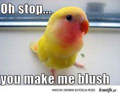 You make me blush... ;)