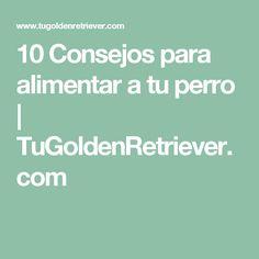 10 Consejos para alimentar a tu perro | TuGoldenRetriever.com