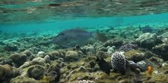 Coral Reef Pictures, Water, Animals, Outdoor, Gripe Water, Outdoors, Animales, Animaux, Animal