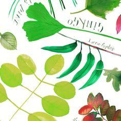 """66 kedvelés, 2 hozzászólás – Rebecca Bradley (@rebeccabradleyillustration) Instagram-hozzászólása: """"#leaves #pattern #illustration"""""""