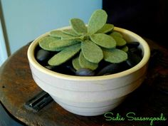 """For those of us with a brown thumb...succulents made from felt! Super easy and they'll never die!! I love this..perfect to keep some """"greenery"""" around the house this winter. #sadieseasongoods"""