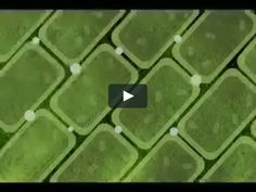 a Tree in the Sun: Visualizing Photosynthesis. Animation explaining the process of photosynthesis. Science Cells, Plant Science, Science Biology, Teaching Biology, Life Science, Teaching Plants, Biology Teacher, Cell Biology, Science Geek