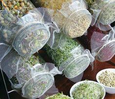 Zelf kiemgroenten kweken: simpel, leuk, heerlijk en suuuuuuupergezond!
