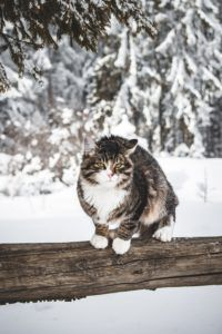 WINTER SHELTERS FOR FERAL CATS Handmade Shelters for Cats Cat Shelters For Winter, People Working Together, Feral Cats, Pet Insurance, Domestic Cat, Pet Health, Exotic Pets, Animal Shelter, Vulnerability