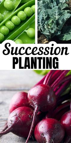 Succession Planting Vegetables for a Longer Harvest - :: Vegetable Gardens & Growing Food :::Extend your harvest season by utilizing the succession planting method. It's an easy way to make your garden work harder. Instead of simply cheering on the f Organic Horticulture, Organic Gardening, Gardening Tips, Container Gardening, Veg Garden, Edible Garden, Vegetable Gardening, Veggie Gardens, Garden Hose