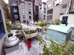 A New York rooftop garden