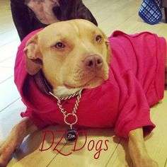 DIY Dog Sweatshirt