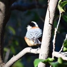 【mmiyonomori】さんのInstagramをピンしています。 《* 先週のヤマガラさん🐧 * 野鳥撮るのってホント難しい!💦💦 殆どがボツ、ボツ、ボツ……。😭 * デジタルカメラでホント良かった。😅 フィルム🎞だったら……😱😱😱 いい時代だよ〜。ホントに。😂 * * #ヤマガラ#山雀#野鳥#野鳥好き #写真好きな人と繋がりたい #写真撮ってる人と繋がりたい #野鳥観察 #自然#自然が好き #森#森歩き#デジイチ#デジイチ初心者 #デジタルで良かった#bird#birdwatching #wild_bird#nature#naturelovers》