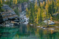 Victoria Lake with autumn Alpine Larches (Larix lyallii) along the Lake Oesa Trail in Yoho National Park, British Columbia, Canada,