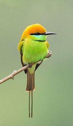 så sjukt vacker form på en fågel och fantastisk färger