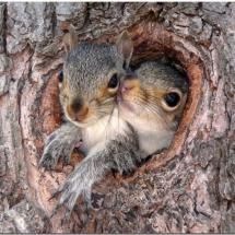 Baby squirrels togetherness!
