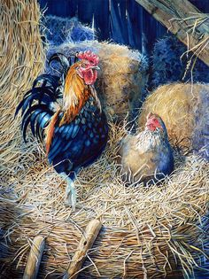 roosters, fantastic art and products - Google Search