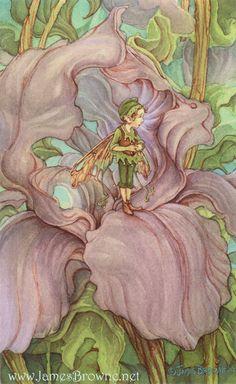 (via Iris Flower Fairy 5x7 Giclee Print by brownieman on Etsy)