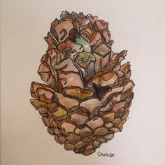 Watercolour pen and ink pine cone.