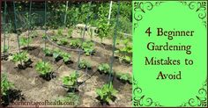 If you're a beginner gardener, avoiding these four common mistakes can help you have a better, more productive garden | ourheritageofhealth.com