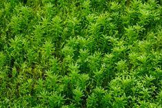Green Moss Background by PetrKratochvil