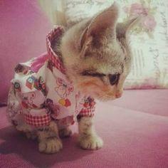 tatlı kediler - Google'da Ara