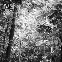 Valokuvatapetti - Steamy Forest - b/w