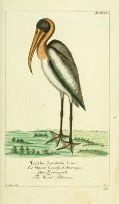 Bd 3 plates (1782) - Gemeinnüzzige Naturgeschichte des Thierreichs : - Biodiversity Heritage Library