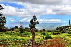 Lunch at O'o Farm - Kula, Hawaii | AFAR.com