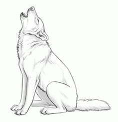 how to draw howling wolves, howling wolf step 10