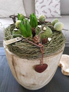 PASTU domov: Dekorace s hyacinty Terrarium, Home Decor, Terrariums, Decoration Home, Room Decor, Home Interior Design, Home Decoration, Interior Design
