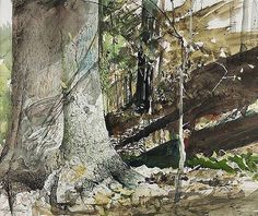 Andrew Wyeth. 'Beech Tree'  watercolor and  not  egg tempera which he used throughout his life. I'm sure a fast study with his fluid brush strokes . The detail of capturing light is beautifully painted.