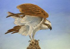 ORIGINAL pastel wildlife painting of bird of by LauraGroganArt, $120.00