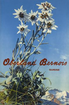Oberland Bernois, Suisse 1935