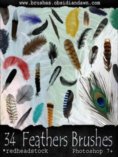 GIMP Feathers Brushes by ~Project-GimpBC on deviantART