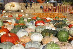 Bay Area Pumpkin Patches & Farms– Half Moon Bay California Coastside