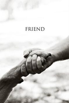 ♔ All animals are my friends!
