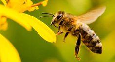 ¿Inseminación de abejas?