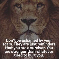 30 Motivational Lion Quotes In Pictures - The Best Lion Picture Quotes on Courage, Strength and determination to succeed. Motivational Quotes For Students, Motivational Words, Inspirational Quotes About Strength, Positive Quotes, Positive Life, Inspiring Quotes, Happy Quotes, Me Quotes, Qoutes