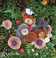 Mushroom Medley with Helvella Heart - Nature Medley, created with found & arranged natural objects on daily wanderings among the islands of the Pacific Northwest. This piece was created on San Juan island in December. - Arrangement and photo by Jill Bliss