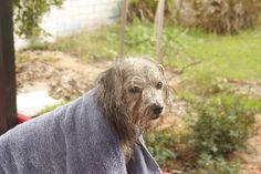 Drying off after a bath