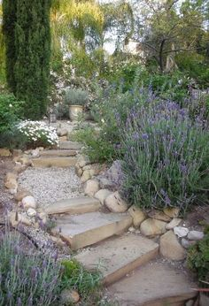 GARDEN: Hill Country - Provence garden stairs / Climate is so very similar. Modern Landscaping, Backyard Landscaping, Landscaping Ideas, Walkway Ideas, Wooded Backyard Landscape, Terraced Backyard, Drought Resistant Landscaping, Drought Tolerant, Mediterranean Garden Design