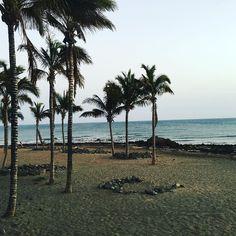 #spain #kanaren #canarias #palmen #lanzarote #futeventura #instatraveling #instagram #picture #jameosdelagua #jameosdelagualanzarote #palmtrees #cesarmanrique #cactus #cactusland #puertodelcarmen