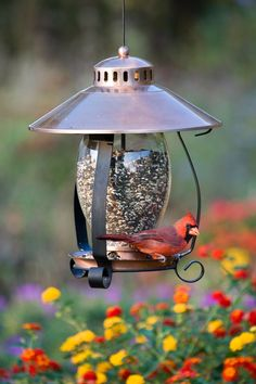 Choose a spot for your bird feeder that's visible from indoors.