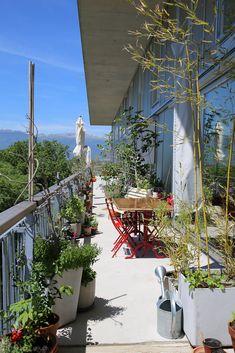 Sozialwohnungsbau mit Lucido® und ganz viel Qualität - das hat CODHA Coopérative de l'habitat associatif in  Genf gemacht. Plants, Geneva, Planters, Plant, Planting
